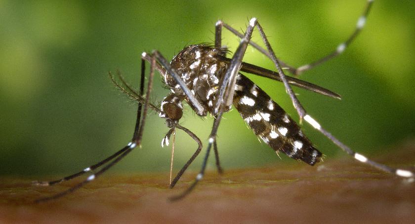 Styl życia, Ukąszenia komarów można poradzić - zdjęcie, fotografia